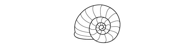chignon escargot